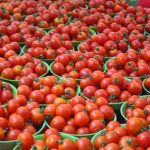 Tomatoes: Policy for an Agrobusiness