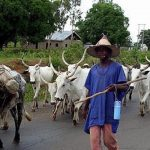 Fulani Herders Crisis: Reality Check on Nigeria's Unity
