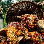 Akwa Ibom Government Partners NEPC on Palm Oil Export